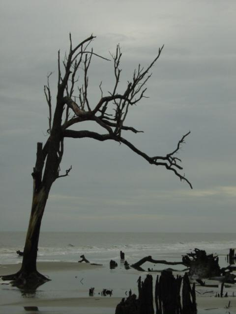 Blog autumn beach tree 3