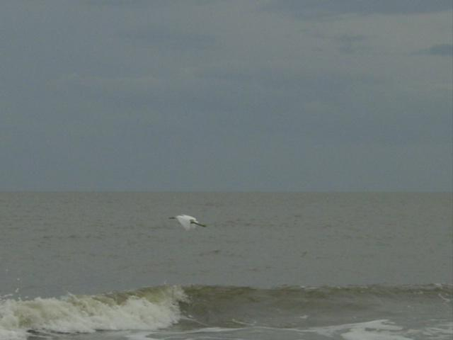 Blog autumn beach egret