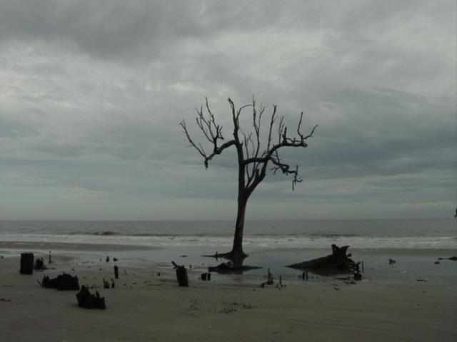 Autumn beach tree2