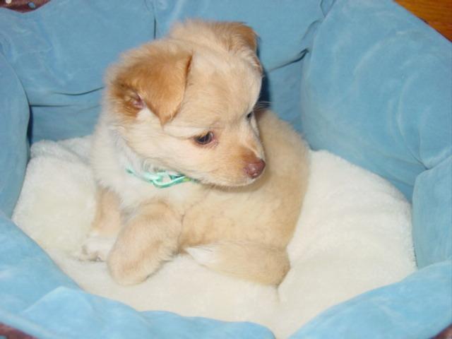 Blog puppy2