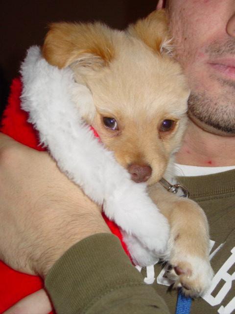 Blog teddy in santa hat