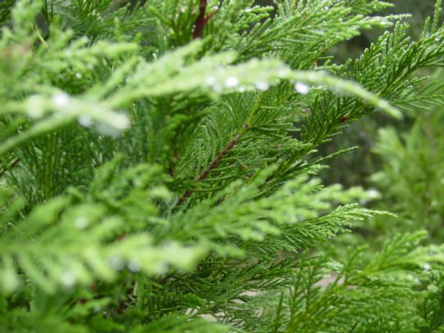 Blog christmas tree closeup