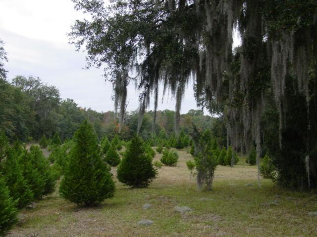 Blog christmas tree farm