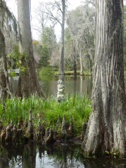 Blog cypress knees 2