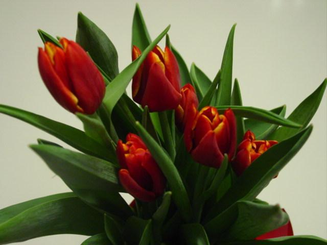 Blog valentine tulips
