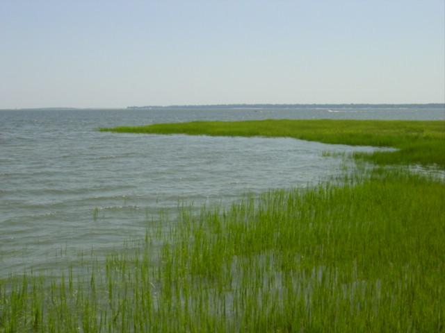 Blog summer marsh