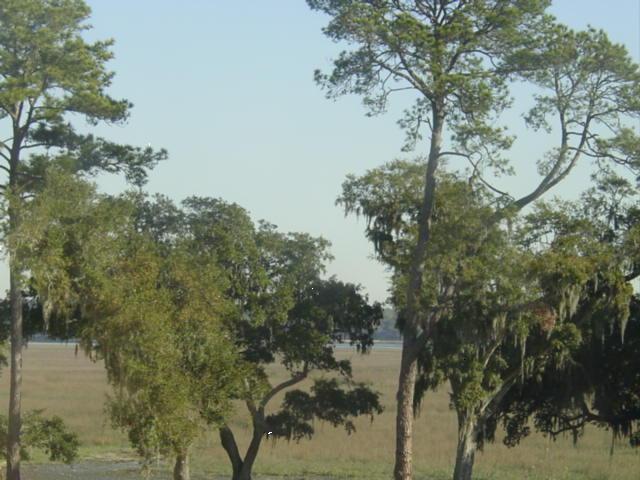 Blog winter marsh hilton feb09