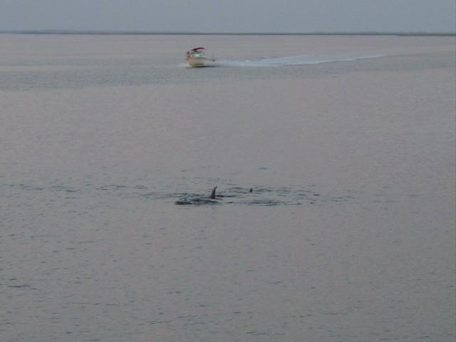 Blog coosaw island dolphins