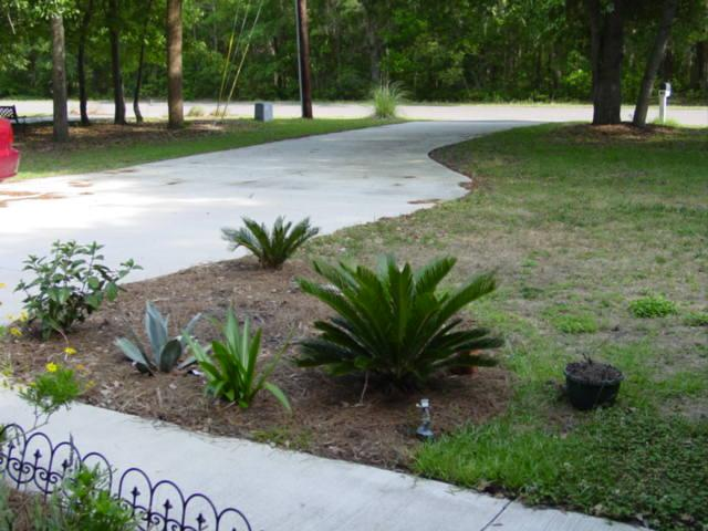 Blog palm tree bed before