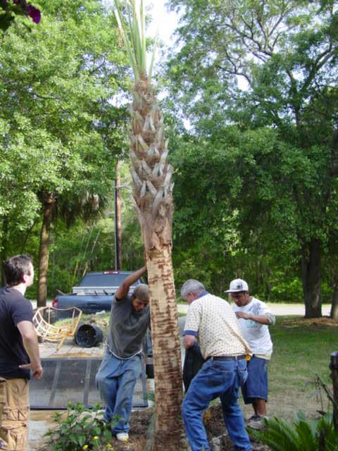 Blog palm tree1