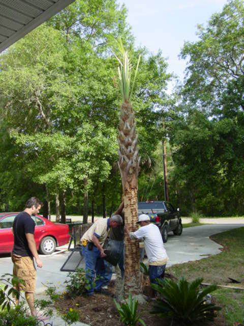 Blog palm tree 2