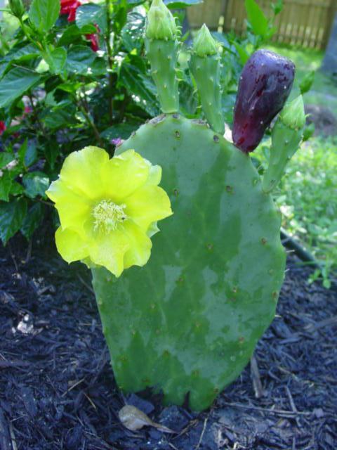 Blog cactus flower