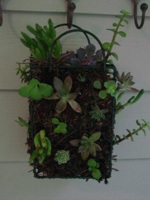 Succulent basket close