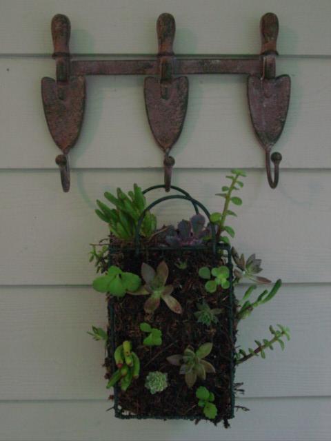Blog succulent basket
