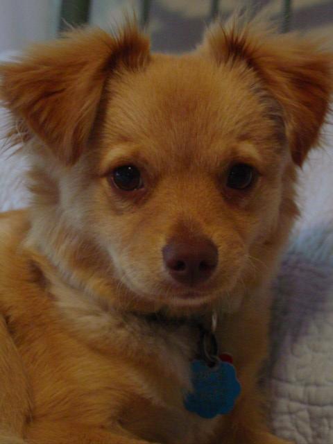 Blog teddy face