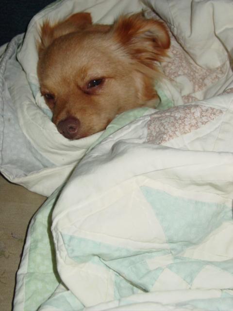 Teddy snuggled09