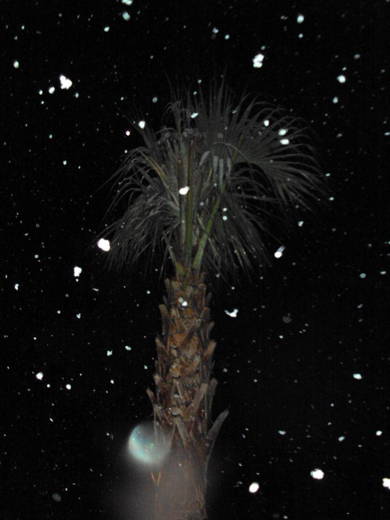 Snowypalm 2 beaufort 2010