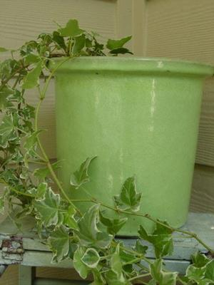 Blog_green_ivy_planter