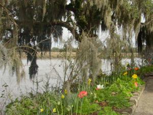 Magnolia_gardens_flowers
