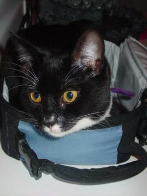 Lunchbox_kitten