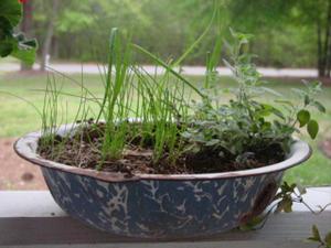 Mini_herb_garden