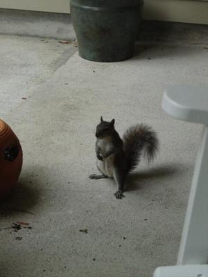 Squirrel_hind_legs