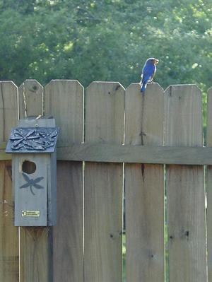 Mama_bluebird