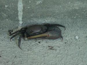 Crab_on_the_porch