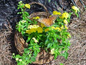 Blog_butterfly_basket