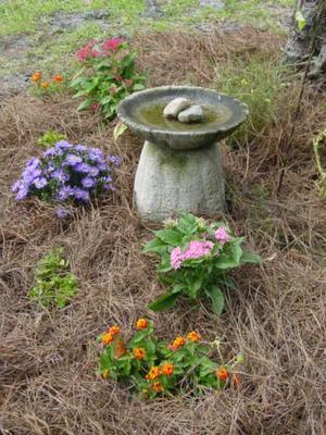 Blog_butterfly_garden_closeup
